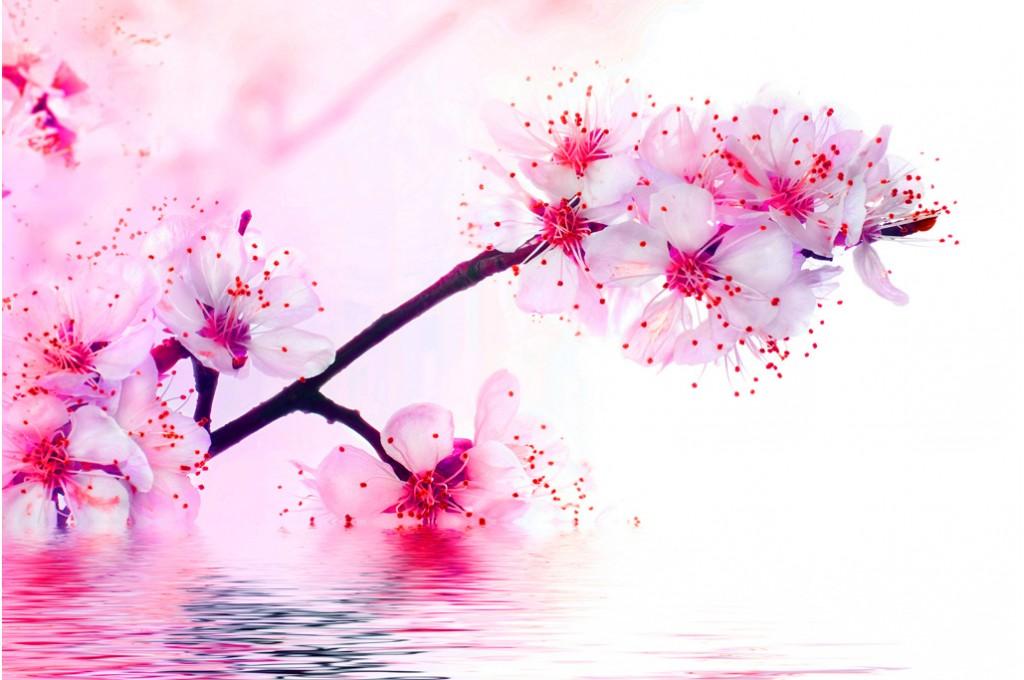 Liens de Cœurs - Fleurs de Cerisier