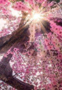Bioénergéticienne, Shamane, Enseignante : Ouvrez votre Cœur à la Lumière